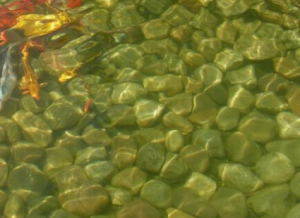algae-rock